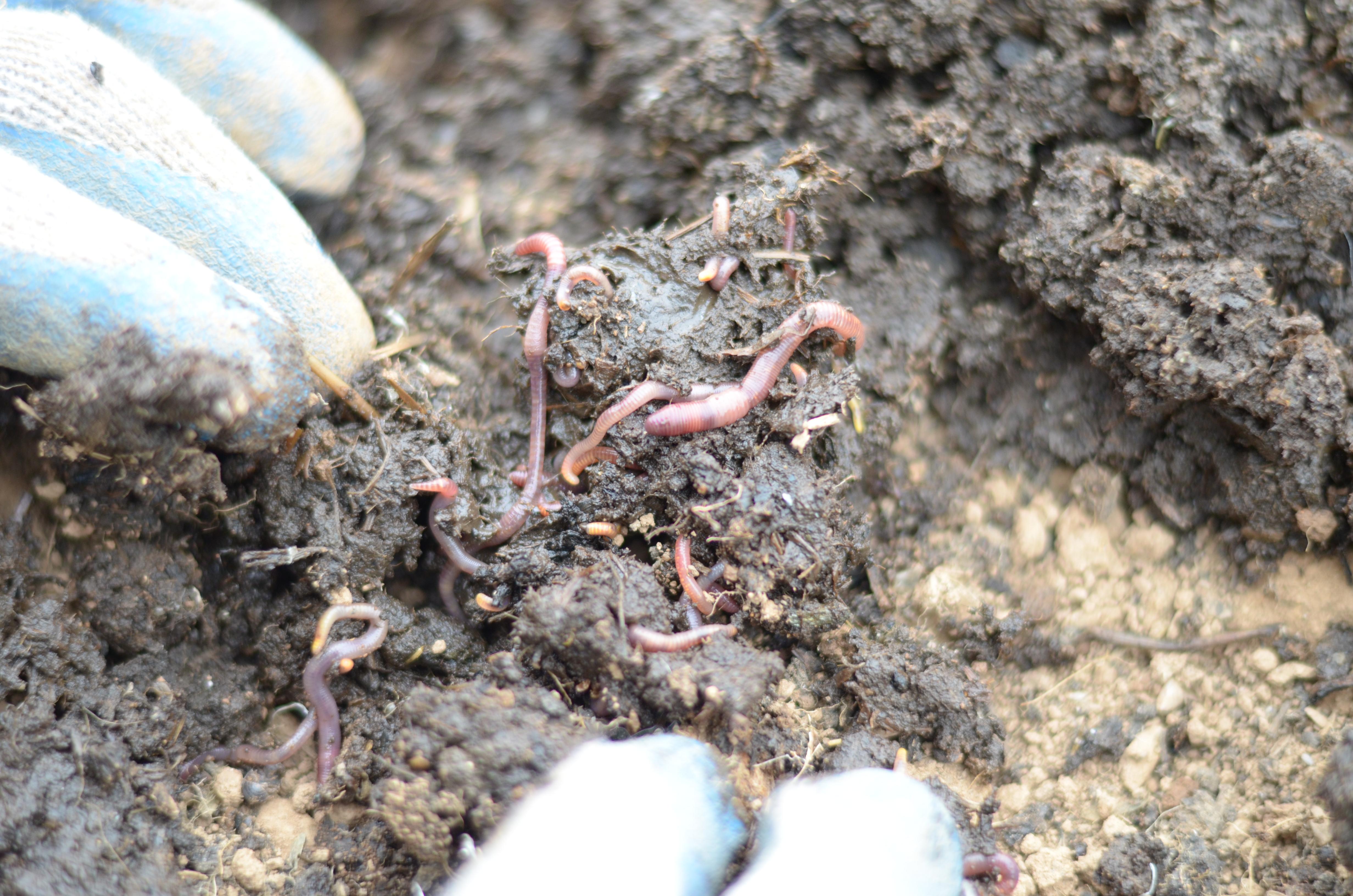 Dog Poop Good Fertilizer