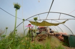 Mixed-use polytunnel (a low cost kind of greenhoues) combines hang-out space with herb and veg garden.